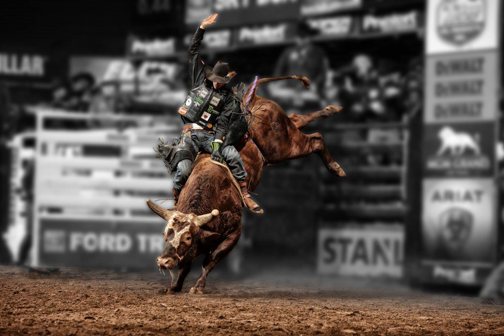 Bushwhacker takes his farewell tour on the PBR circuit through Tulsa this weekend. Image courtesy Professional Bull Riders.
