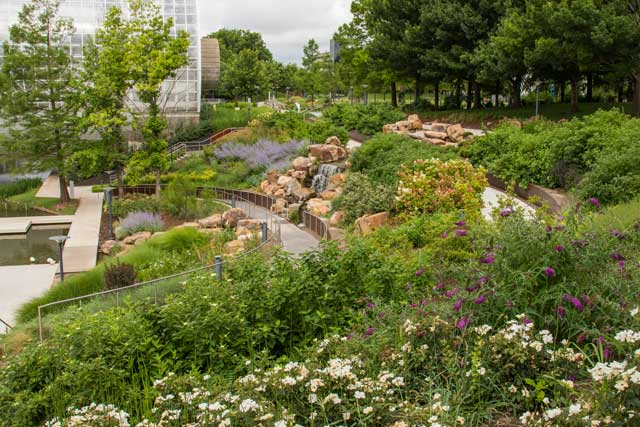 Photo courtesy Myriad Botanical Gardens.